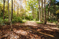 Forest Royalty Free Stock Image - 18330706