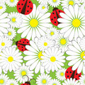 Ladybirds And Chamomile Royalty Free Stock Photo - 18358815