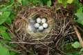 Bird Nest With Eggs Stock Image - 18369631