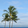 Palm Trees Royalty Free Stock Images - 18432389