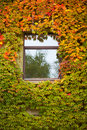 Wall Overgrown With Fall Colored Vine And Ivy Royalty Free Stock Images - 18438359