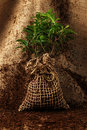 Tree Ready To Be Planted Stock Photo - 18468890
