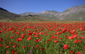 Blue Sky And Red Poppies Stock Photography - 18489852