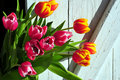 Tulip Bouquet Spring Easter Wooden Royalty Free Stock Photo - 18513535