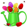 Watering Can With Spring Tulip Flowers Stock Photography - 18647952