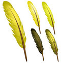 Yellow Feather Stock Image - 18666771