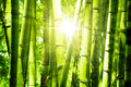 Bamboo Forest Stock Photography - 18671222