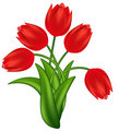Illustration Of Red Tulips. Stock Images - 18673154