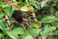Spider With Little Spiders On The Back Royalty Free Stock Image - 18675056