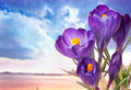 Beautiful Spring Flowers Royalty Free Stock Images - 18721749