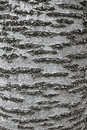 Tree Bark Texture Stock Images - 18773044