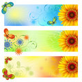 Summer Banners Royalty Free Stock Photography - 18777937