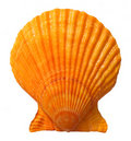 Seashell Royalty Free Stock Images - 18842409