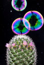 Bubble And Cactus Stock Images - 18863184