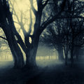 Foggy Park Path Stock Photography - 18897622