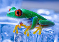Cold Frog Stock Image - 1890391