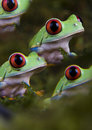 Frogs Royalty Free Stock Photo - 1890605