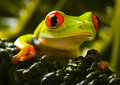 Frog Royalty Free Stock Image - 1890766