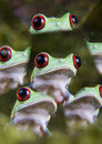 Frogs Royalty Free Stock Image - 1891386