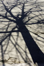 Shadow Of A Tree Royalty Free Stock Photos - 18939468