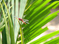 Red Dragonfly Royalty Free Stock Photos - 1904438