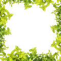 Herb Leaf Abstract Border Royalty Free Stock Photos - 19029818