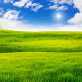Green Grass Field Stock Photography - 19045212