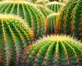 Cactus Stock Photography - 19045622