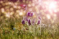 Spring Flowers Stock Images - 19074694