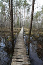 Path In The Swamp Royalty Free Stock Image - 19183246