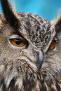 Eagle Owl Stock Photography - 19191542