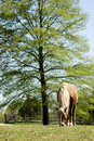 Grazing Horse Royalty Free Stock Photography - 1920277