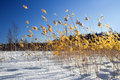 Winter Country Colors-5 Stock Image - 1921211