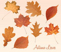 Set Of Autumn Leaves Royalty Free Stock Images - 19285049