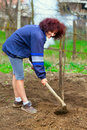Redhead Young Lady Digging In The Garden Stock Image - 19287191