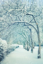 Winter Trees In Snow Royalty Free Stock Photo - 19288185