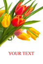 Red And Yellow Tulips Stock Image - 19300761