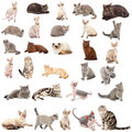 Collection Of A Cats Royalty Free Stock Photo - 19340375