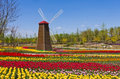 Windmill With Tulip Field Royalty Free Stock Photos - 19371068
