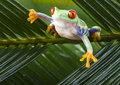 Frog Royalty Free Stock Photography - 1940427