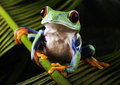 Frog Royalty Free Stock Images - 1940429