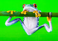 Crazy Frog Stock Images - 1940604