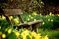 Bench In Park Stock Image - 19431901