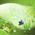 Butterfly, Clover And Grass Royalty Free Stock Photography - 19436957