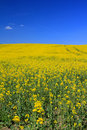 Rape Royalty Free Stock Images - 19442229