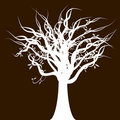 Twisted Tree Royalty Free Stock Images - 19476909