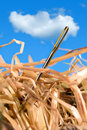 Needle In A Haystack Royalty Free Stock Photo - 19479095