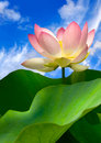 Pink Water Lily And Beautiful Sky Stock Photos - 19489283