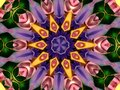 Flower Kaleidoscope Pattern Royalty Free Stock Image - 1951596
