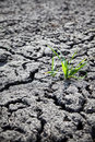 Green Plant Growing From Cracked Earth Stock Photo - 19514360